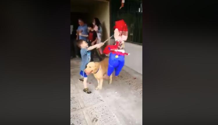 perrito se roba la fiesta / Fuente: Facebook @Chuchito GT