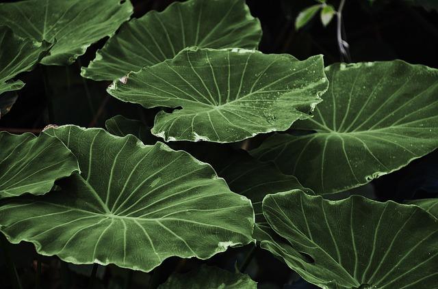 plantas sienten dolor y lo comparten