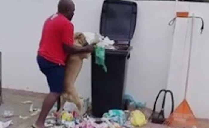 perro recoge basura