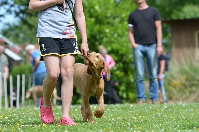dog running carrera cdmx