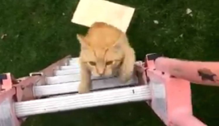 gato sigue a joven