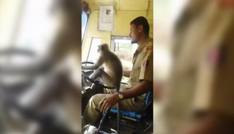 mono conduce en india