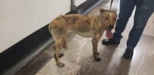 rescate perro metro cdm