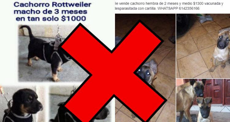 Facebook prohíbe venta de animales en la red social