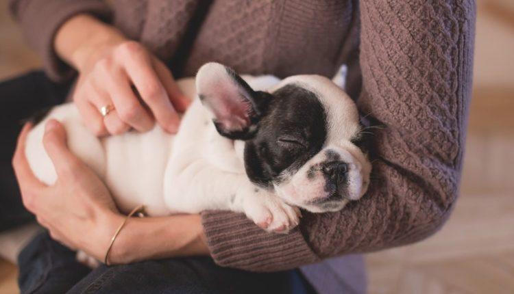 perros mujeres sueño