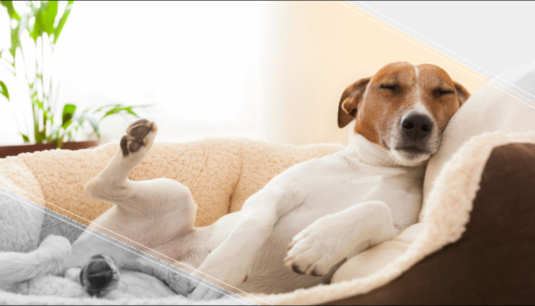 con que sueñan los perros