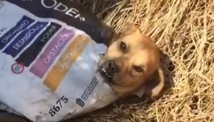 perro dentro de un costal