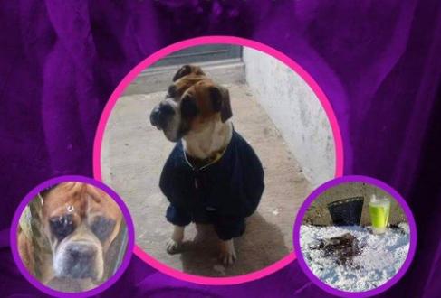 #JusticiaParaMiguel el cruel asesinato de un perro con pirotecnia