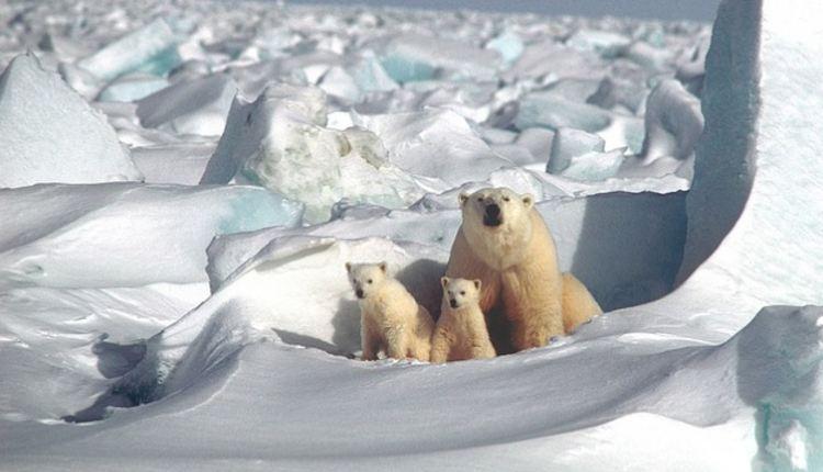 ártico sin hielo