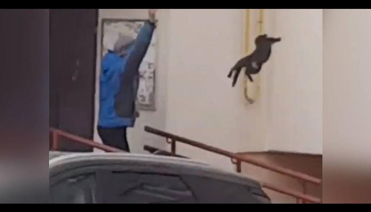 lanza un gato contra alce