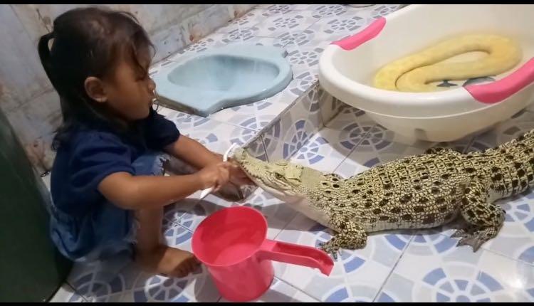 niña limpia diente a cocodrilo