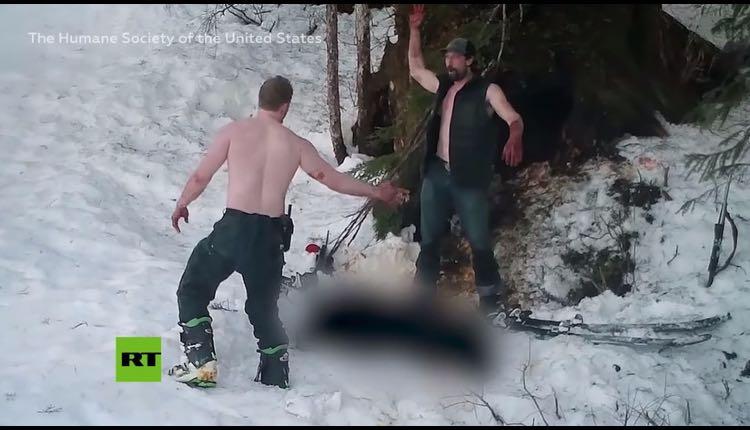 padre e hijo matan a osa