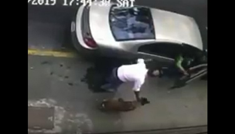 secuestran a perrita pastor belga