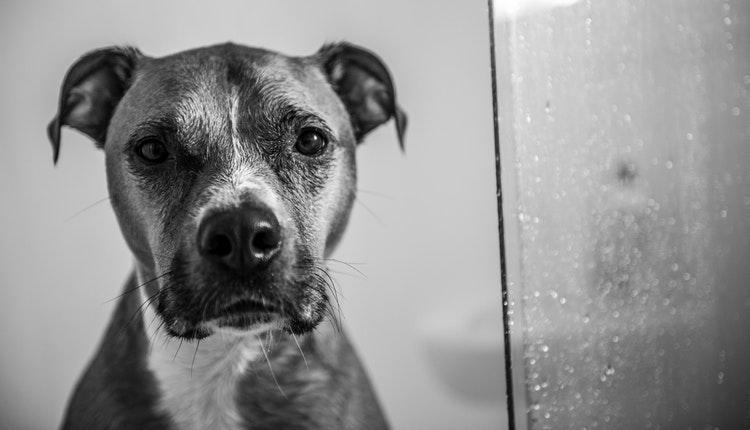 dueños que titulen a sus perros sanciones