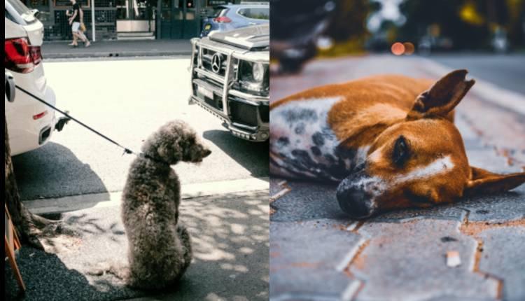 carcel para quienes abandonen perros en la via publica