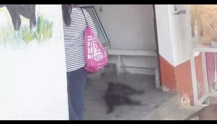 ¡CRUEL! Carnicero apuñaló a perrito por pararse frente a su negocio. Noticias en tiempo real