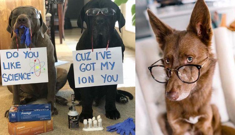perros huelen el cáncer