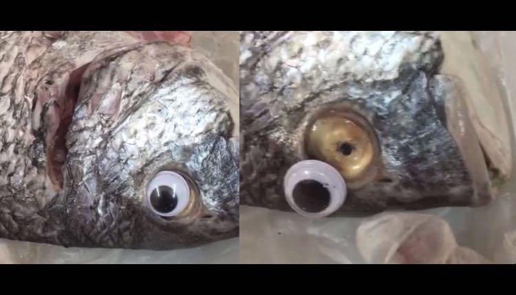 pescado falso