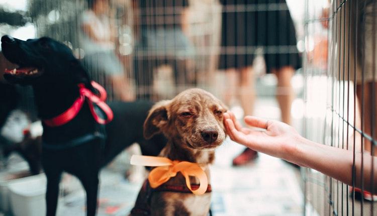 BBVA Bancomer lanza un seguro para tus mascotas. Noticias en tiempo real