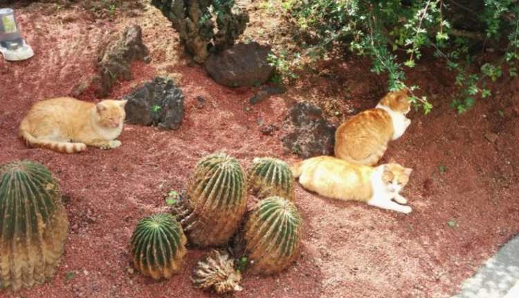 gatos de palacio nacional