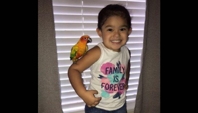 niña pide a su pájaro atacar