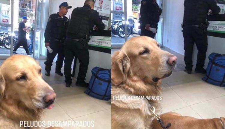 perritos detenidos por jugar en la fuente