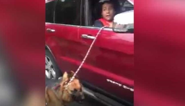 maltrato a su perro