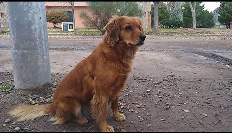 perrita espera a su dueño en la carcel de argentina