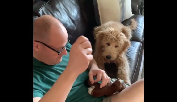 perrito ve como reparan su juguete favorito