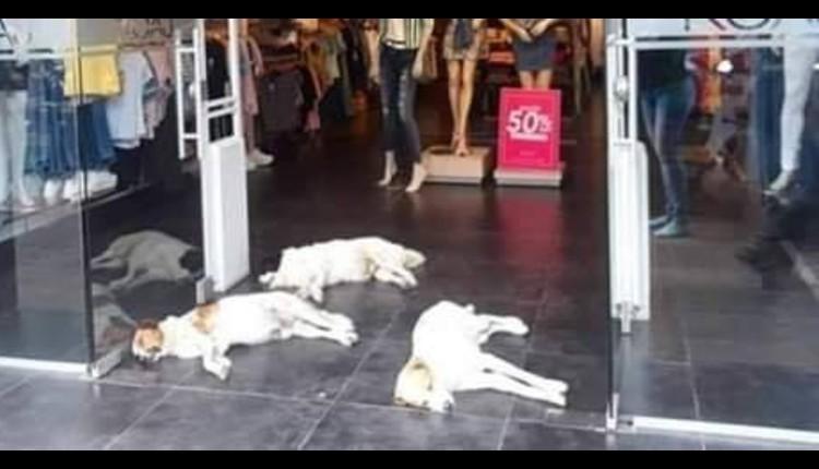perritos se resguardan de calor tienda colombia koaj