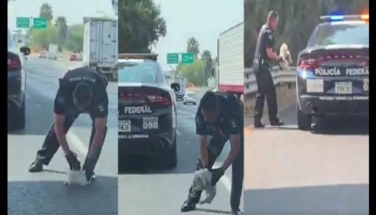policia federal salva a cachorro
