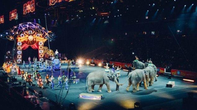 ley circo animales