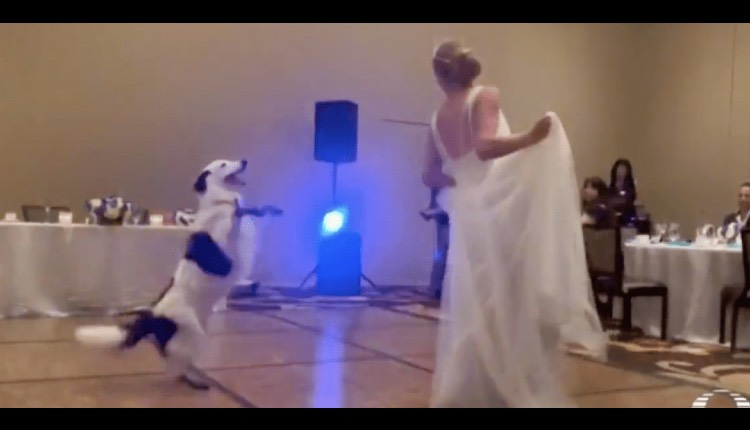 perro baila en boda con novia