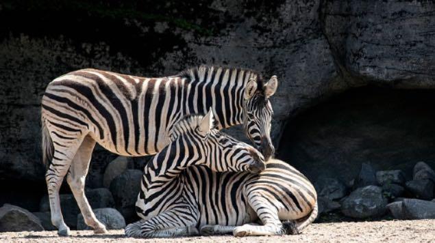presupuesto zoologico