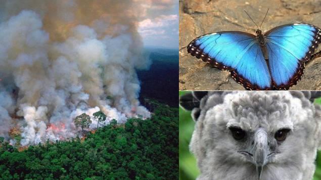 animales amenazados incendio amazonas