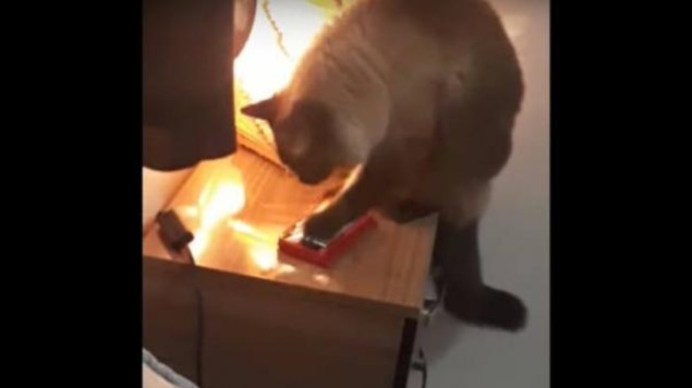 gato alarma