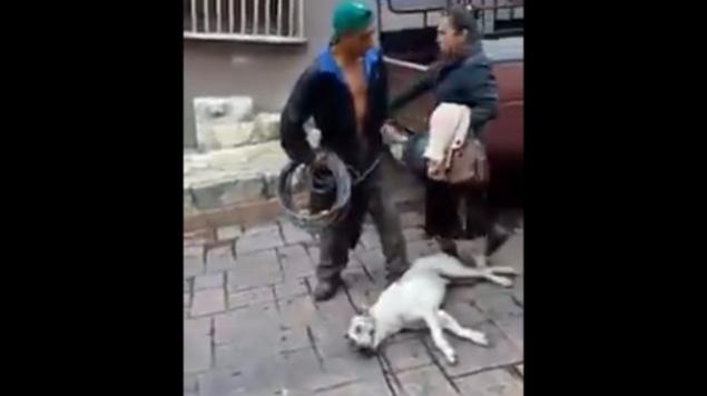 hombre arrastra perro chiapas