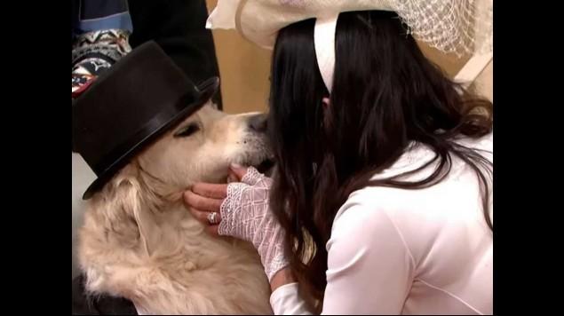 mujer se casó perro