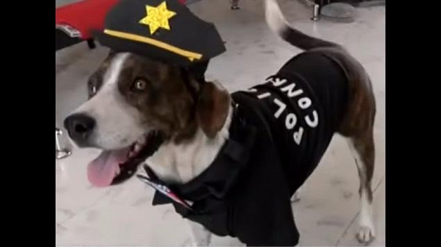 chilaquil perro policía yucatán