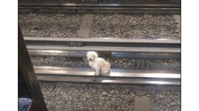 perro rescatado en metro