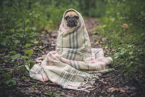 perros sueños