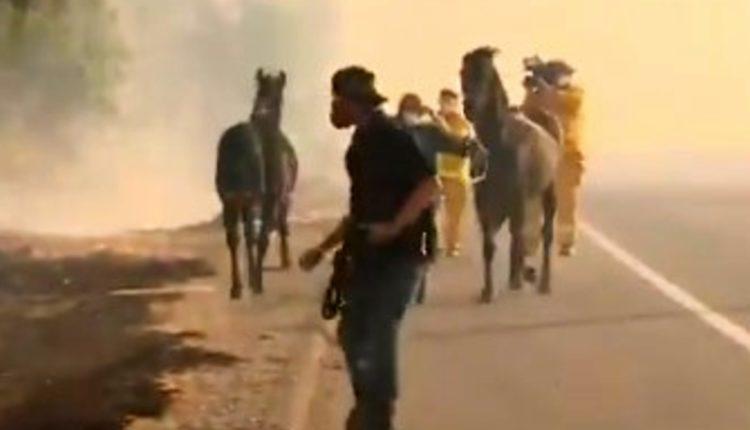 caballo rescate incendios california