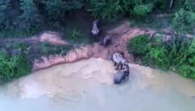 elefantes mueren tailandia