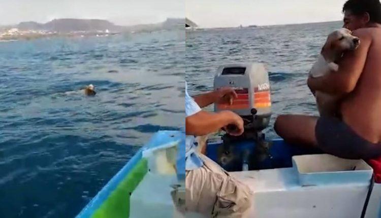 recatan a perro en el mar