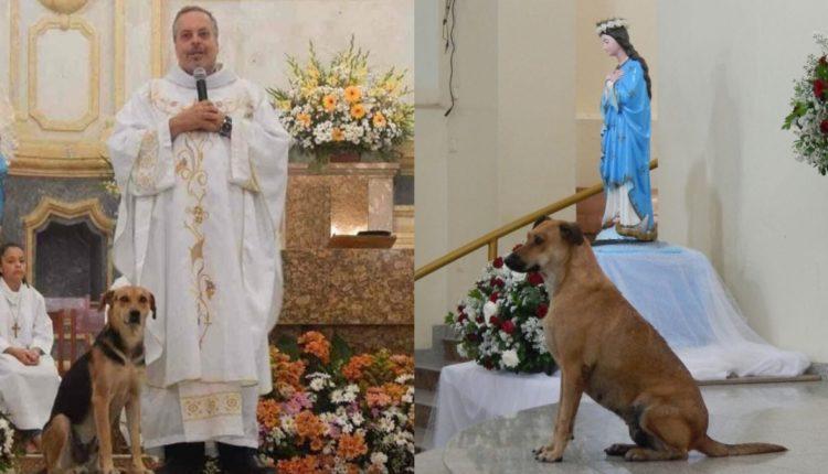 sacerdote perros