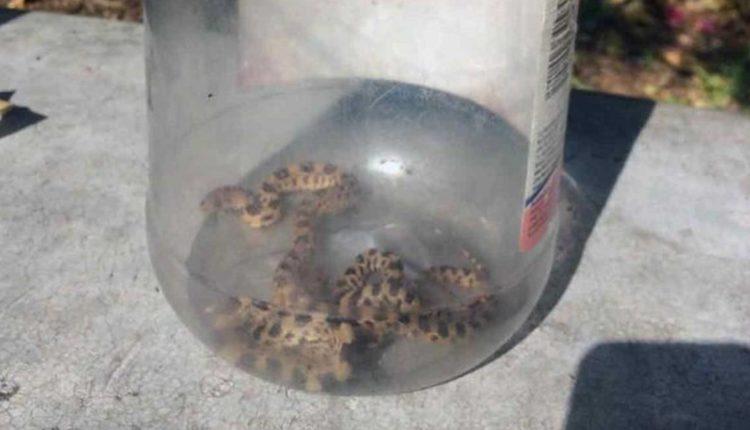 serpientes primaria iztapalapa