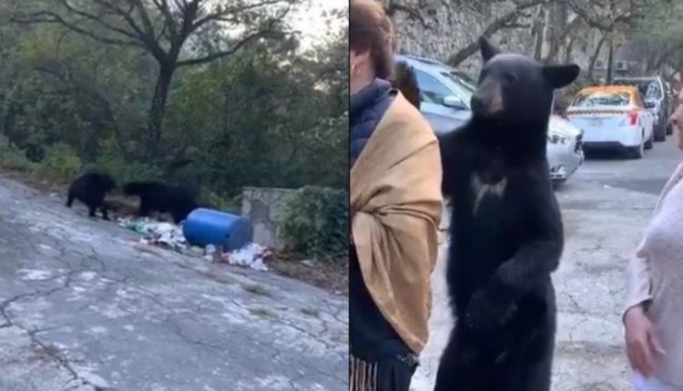 oso acaricia mujer