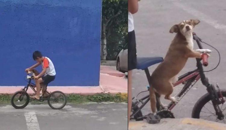 perrito bicicleta