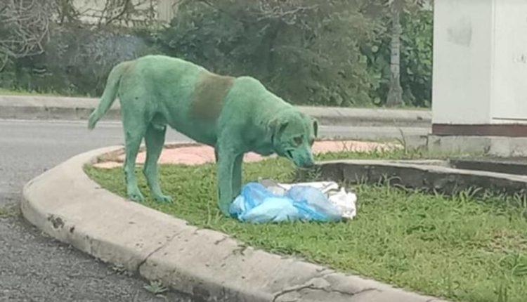 perro pintado verde