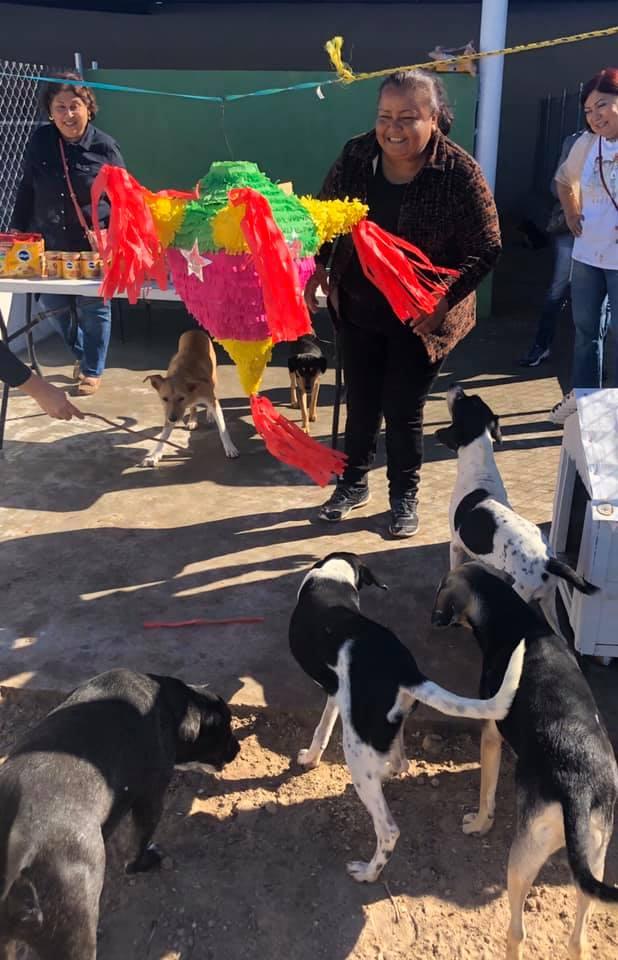 posada perros